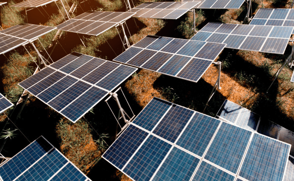 Featuring Image of 500 MW Solar Project Tender-min